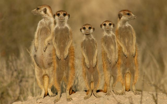 Meet the Meerkats for Two Extremedays Experience 1